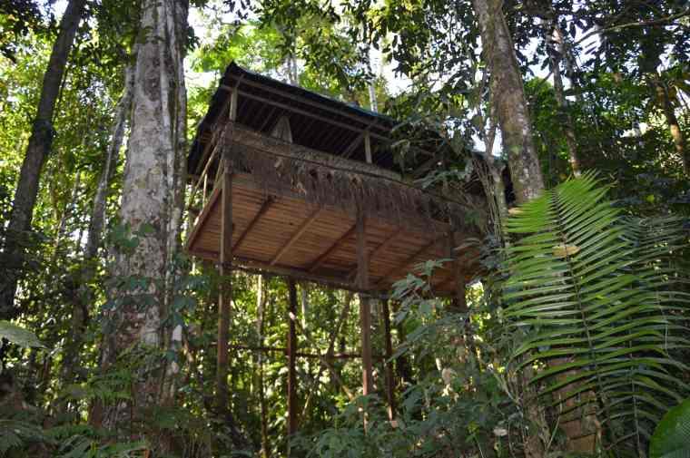 Casa-albero_Manu_Perù-min