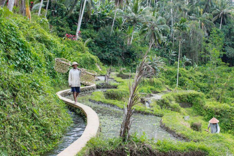 G3 - Telagalang Rice Terrace