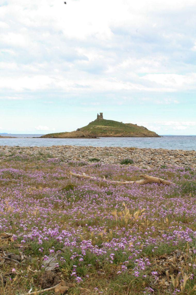 Isole Finocchiarola dalla spiaggia fiorita